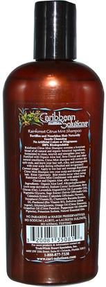 Caribbean Solutions, Rainforest Citrus Mint Shampoo, 8 oz ,حمام، الجمال، الشعر، فروة الرأس، الشامبو، مكيف